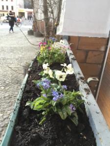 kollwitzstrasse2-cafe-courage-16-3
